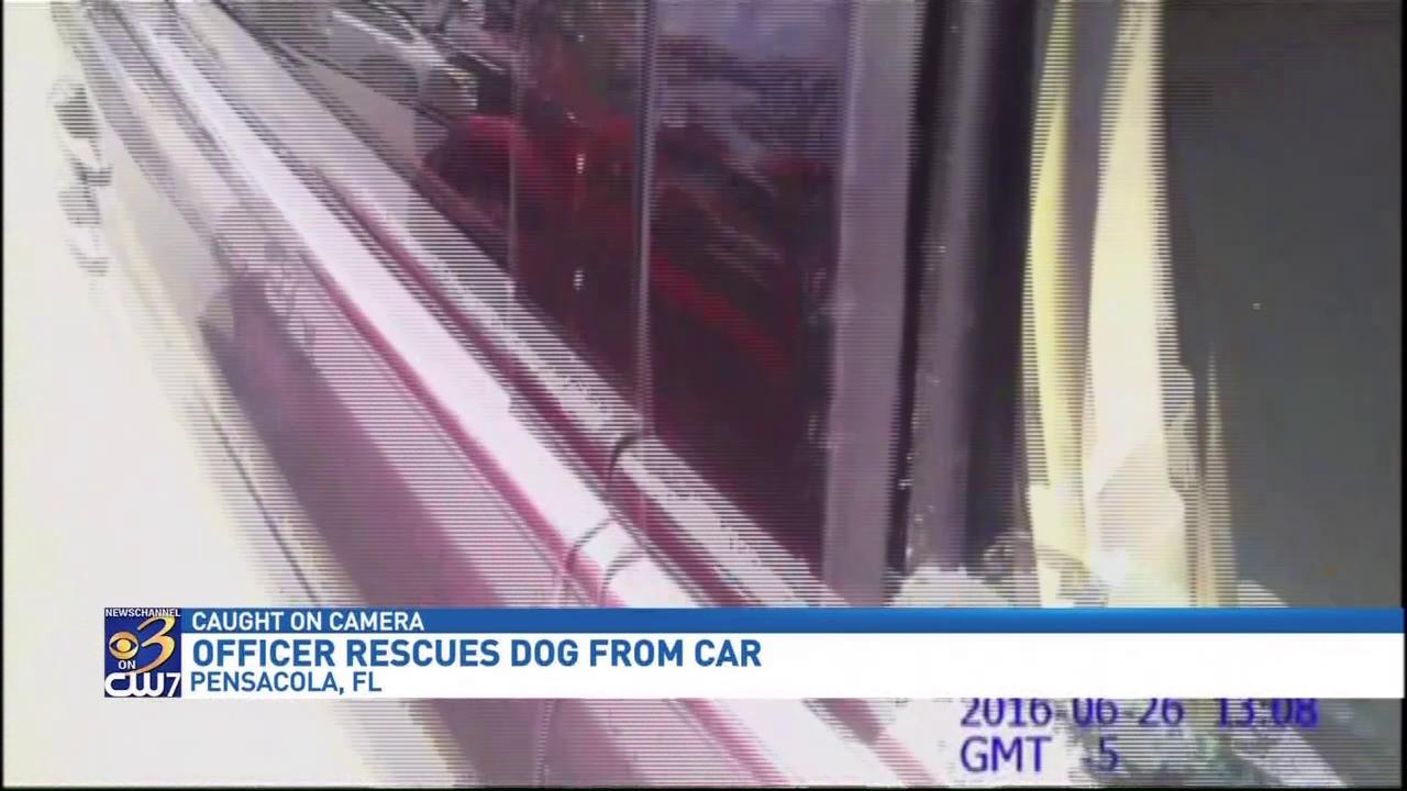 Florida police officer shatters window to save puppy from hot car