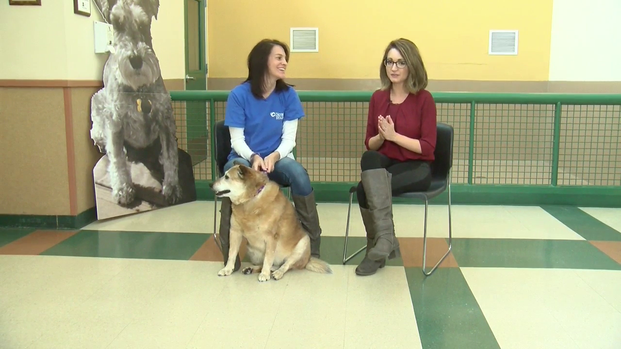 Nevada Humane Society: Meet Willard the pup!