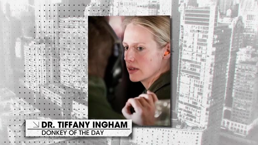 Donkey Of The Day Dr Tiffany Ingham The Breakfast